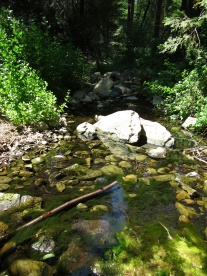 Beartrap Creek