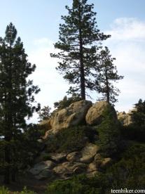 Trees at Pine Mountain Lodge